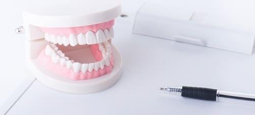 歯の模型の画像